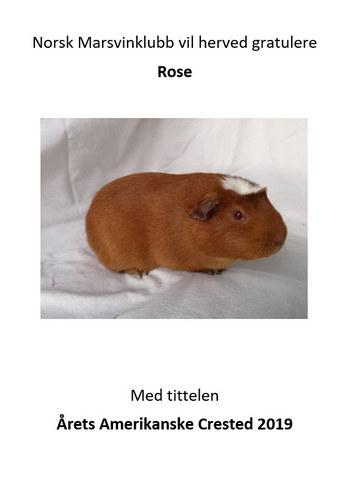 nmk gratulerer Rose.jpg