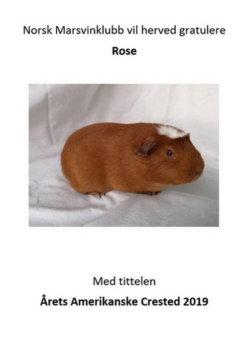 nmk gratulerer Rose 500.jpg